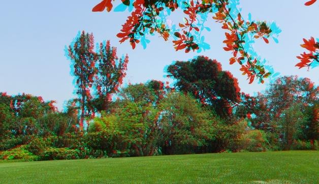 Huntington Subtropical Garden 3DA 1080p DSCF0996