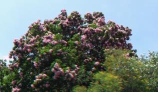 Huntington Subtropical Garden 3DA 1080p DSCF1372