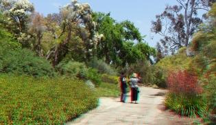 Huntington Subtropical Garden 3DA 1080p DSCF1388