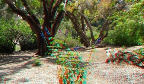 Huntington Subtropical Garden 3DA 1080p DSCF1415