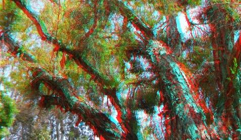 Huntington Subtropical Garden 3DA 1080p DSCF1438