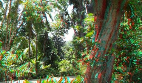 Huntington Subtropical Garden 3DA 1080p DSCF1514
