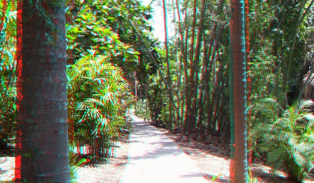 Huntington Subtropical Garden 3DA 1080p DSCF1516