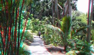Huntington Subtropical Garden 3DA 1080p DSCF1520