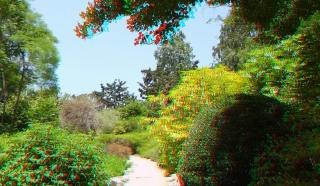 Huntington Subtropical Garden 3DA 1080p DSCF1546