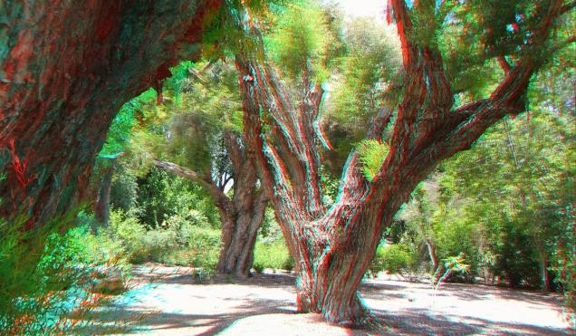 Huntington Subtropical Garden 3DA 1080p DSCF1575