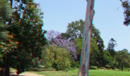 Huntington Subtropical Garden 3DA 1080p DSCF1610