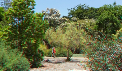Huntington Subtropical Garden 3DA 1080p DSCF1621