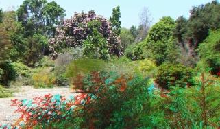 Huntington Subtropical Garden 3DA 1080p DSCF1631
