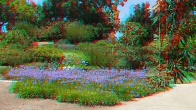 Huntington Subtropical Garden 3DA 1080p DSCF1799