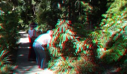 Huntington Subtropical Garden 3DA 1080p DSCF1954