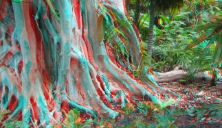 Huntington Subtropical Garden 3DA 1080p DSCF6460