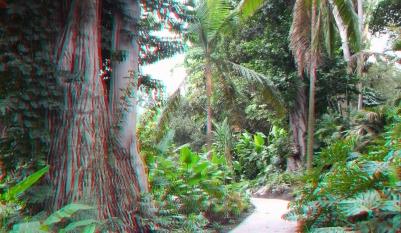 Huntington Subtropical Garden 3DA 1080p DSCF6483