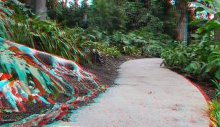 Huntington Subtropical Garden 3DA 1080p DSCF6513