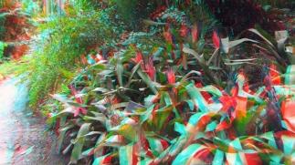 Huntington Subtropical Garden 3DA 1080p DSCF6545