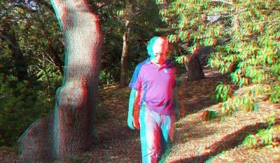 Huntington Subtropical Garden 3DA 1080p DSCF7425
