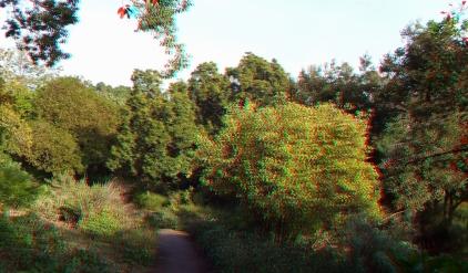 Huntington Subtropical Garden 3DA 1080p DSCF7426