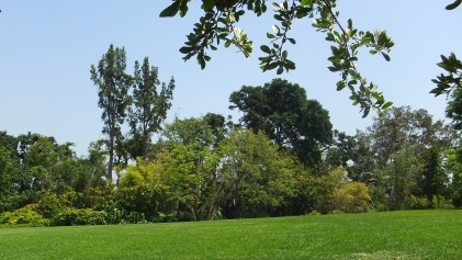 Huntington Subtropical Garden DSCF0996