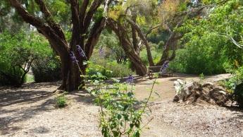 Huntington Subtropical Garden DSCF1415