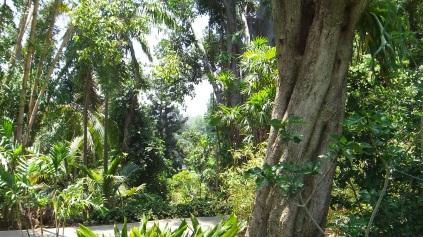 Huntington Subtropical Garden DSCF1514
