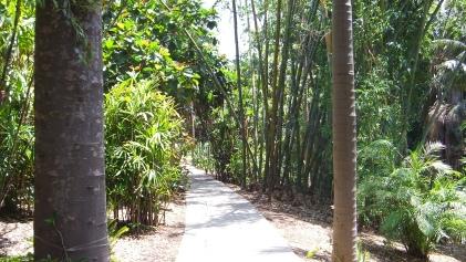 Huntington Subtropical Garden DSCF1516
