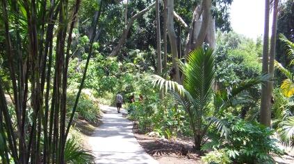 Huntington Subtropical Garden DSCF1520