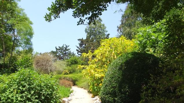 Huntington Subtropical Garden DSCF1546