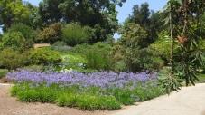 Huntington Subtropical Garden DSCF1799