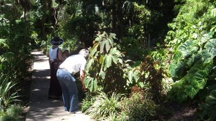 Huntington Subtropical Garden DSCF1954