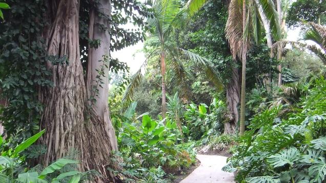 Huntington Subtropical Garden DSCF6483
