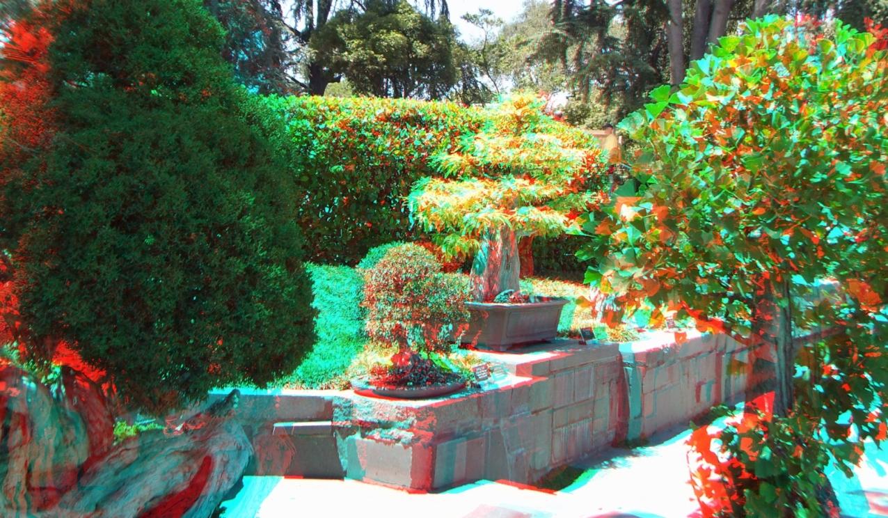 Huntington Bonsai Garden 3DA 1080p DSCF2233