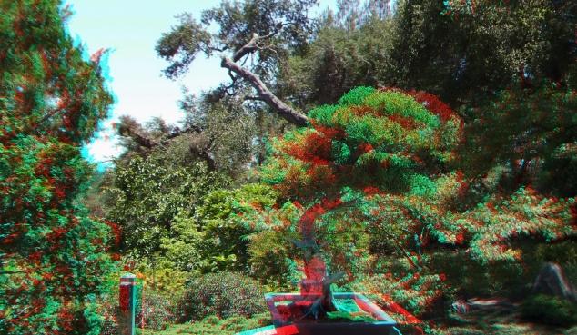 Huntington Bonsai Garden 3DA 1080p DSCF2234