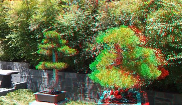 Huntington Bonsai Garden 3DA 1080p DSCF2236