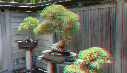 Huntington Bonsai Garden 3DA 1080p DSCF2241