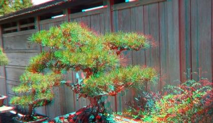 Huntington Bonsai Garden 3DA 1080p DSCF2243