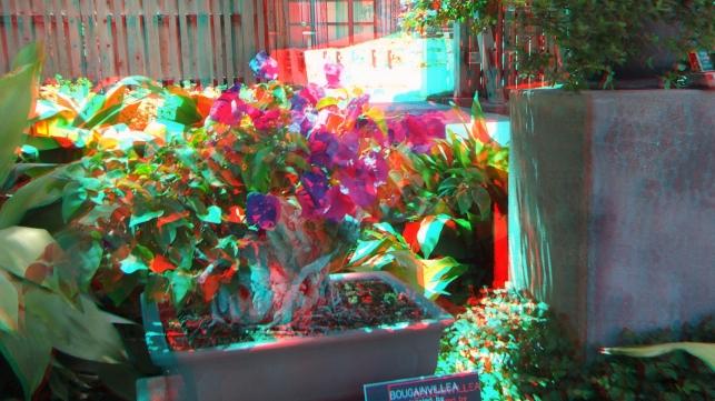 Huntington Bonsai Garden 3DA 1080p DSCF2249