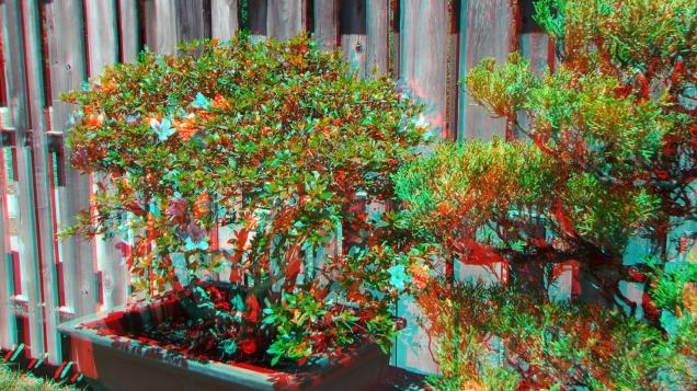Huntington Bonsai Garden 3DA 1080p DSCF2255