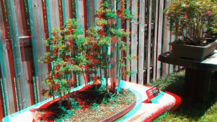 Huntington Bonsai Garden 3DA 1080p DSCF2256
