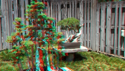 Huntington Bonsai Garden 3DA 1080p DSCF2260
