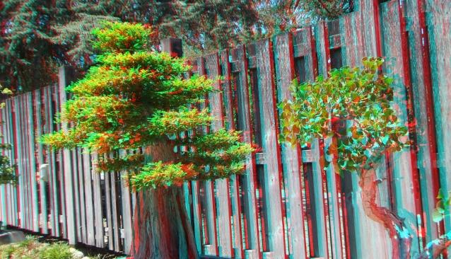 Huntington Bonsai Garden 3DA 1080p DSCF2262