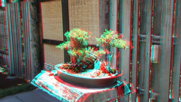 Huntington Bonsai Garden 3DA 1080p DSCF2268