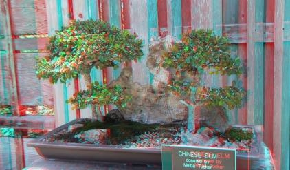 Huntington Bonsai Garden 3DA 1080p DSCF2269