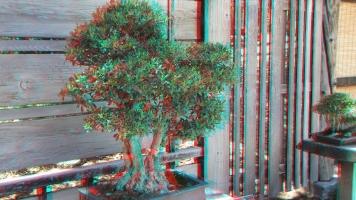 Huntington Bonsai Garden 3DA 1080p DSCF2272