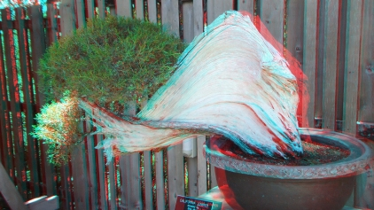 Huntington Bonsai Garden 3DA 1080p DSCF2273