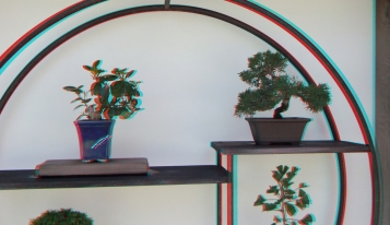 Huntington Bonsai Garden 3DA 1080p DSCF2275