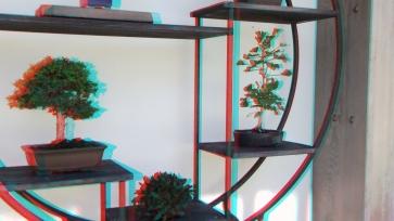 Huntington Bonsai Garden 3DA 1080p DSCF2276