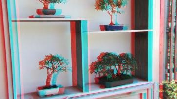 Huntington Bonsai Garden 3DA 1080p DSCF2277