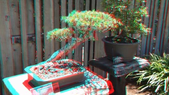 Huntington Bonsai Garden 3DA 1080p DSCF2284