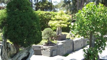 Huntington Bonsai Garden DSCF2233
