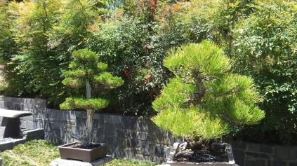 Huntington Bonsai Garden DSCF2236